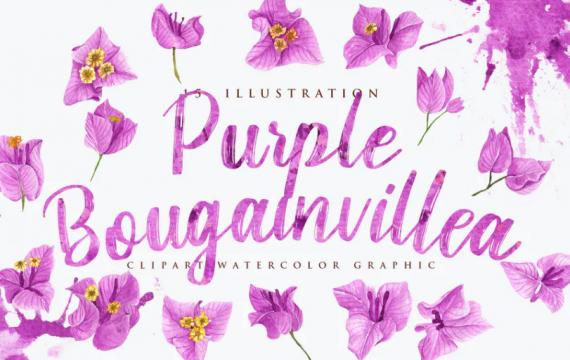 15水彩紫色九重葛图