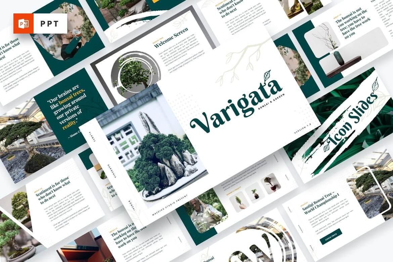 Varigata-盆景树花园PowerPoint模板